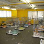 犬猫病院開業に向けての下地リフォーム(材料は施主支給)施工後写真