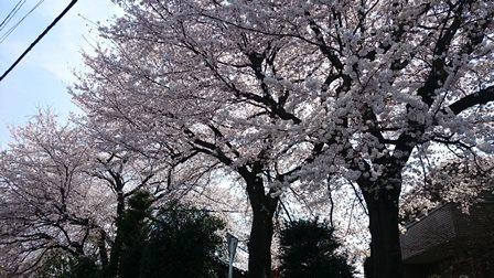 須賀神社の北側から